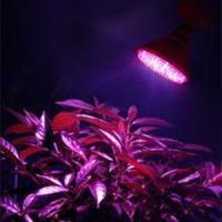 Wholesale MR16, GU10 AC / DC12V 15w PVC, Aluminum Epistar LED Panel Grow Lights For Leafy Flowers from china suppliers