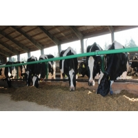Wholesale Flexible Plastic Single Cross L236'' Cow Free Stall from china suppliers