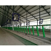 Wholesale Humanized L250mm Cow Free Stall For Cows Feeding from china suppliers