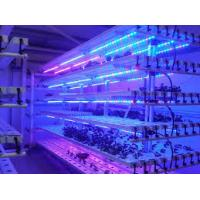 Wholesale Greenhouse T5 LED fluorescent plant grow lights for lettuce , cabbage from china suppliers