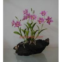 Wholesale CLAY FLOWERS ORCHID(Elizabeth L ) from china suppliers
