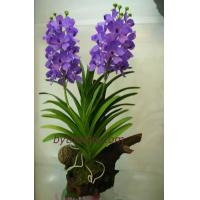 Wholesale CLAY FLOWERS Vanda L from china suppliers