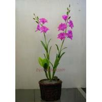 Wholesale CLAY FLOWERS Dendrobium Sw- L from china suppliers