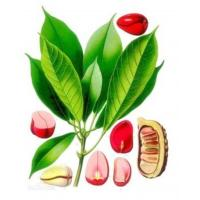 Wholesale 100% Natural Cola Extract/Cola Powder from china suppliers