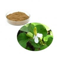 Wholesale Houttuynia Cordata Extract from china suppliers
