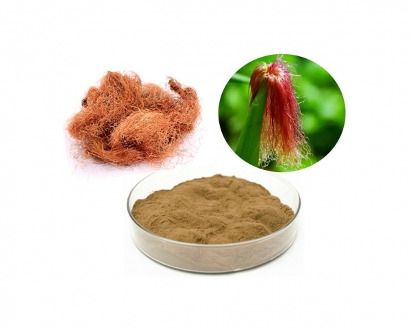 Quality Corn Silk Extract for sale