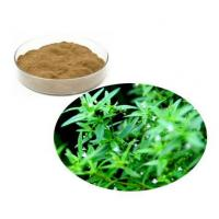 Wholesale Oldenlandia Diffusa Extract from china suppliers