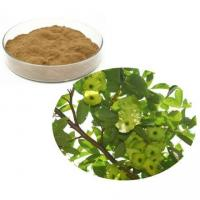 Wholesale Cyclocarya Paliurus Extract from china suppliers