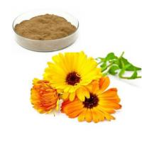 Wholesale Calendula Officinalis Extract from china suppliers