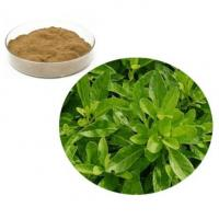 Wholesale Gynura Procumbens Extract from china suppliers